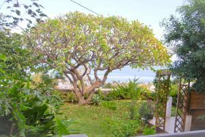 Cap Soleil, Ferienwohnungen  Saint-Leu - big - 37