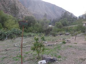 Eco- Albergue Amalai, Inns  Maras - big - 15