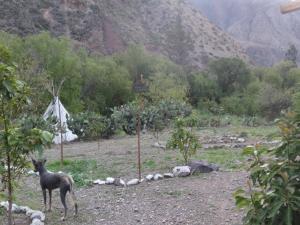 Eco- Albergue Amalai, Hostince  Maras - big - 21
