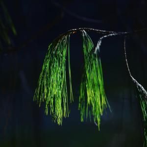 Refúgio Mantiqueira, Chaty v prírode  São Bento do Sapucaí - big - 57