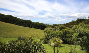 Kowhai Close Accommodation, Guest houses  Oneroa - big - 25