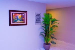Madar Suites, Apartmanhotelek  Yanbu - big - 22