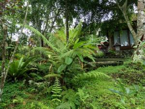 Mi Casa Ijen Guest House, Penzióny  Licin - big - 38