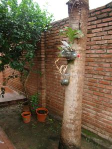 Sur Backpackers, Hostely  Santa Cruz de la Sierra - big - 28