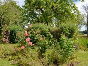 Coed-Y-Gelli Cottage, Case vacanze  Llanddewi Rhydderch - big - 3