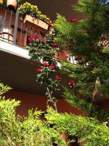 Artemis Apartments, Apartmánové hotely  Konitsa - big - 20