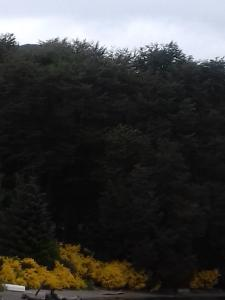 Hosteria Lekun Lekun, Penziony – hostince  Villa La Angostura - big - 74
