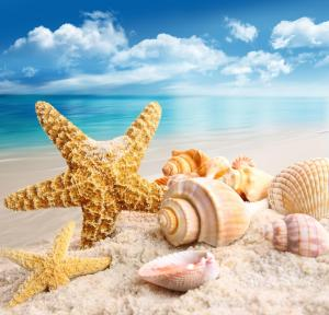 Local Travel Beach, Гостевые дома  Хангнаамеедхоо - big - 24