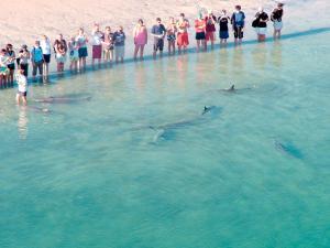 Aspen Parks Monkey Mia Dolphin Resort