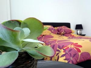 Le Clos Chez Michel, Bed & Breakfasts  Montpellier - big - 19