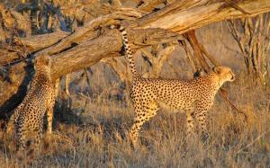 Pungwe Safari Camp, Chaty v prírode  Manyeleti Game Reserve - big - 10