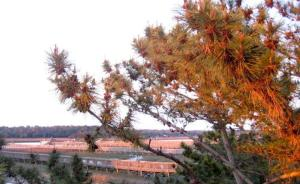 Porpoise-3, Ferienhäuser  Holden Beach - big - 8