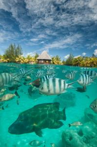 The St Regis Bora Bora Resort, Rezorty  Bora Bora - big - 68