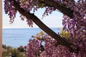 Hotel Galli, Hotels  Campo nell'Elba - big - 37