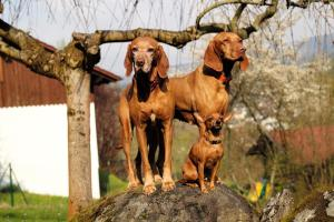 Gästehaus Falkenau Urlaub mit Hund, Отели  Фрауэнау - big - 16