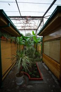 Eco Hotel, Hotel  Tashkent - big - 36