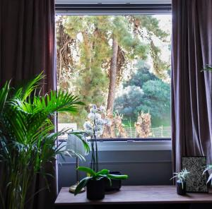 Live Life Acropolis, Apartmány  Atény - big - 3
