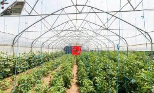 Farm stay Orlov put, Farmházak  Bellye - big - 43
