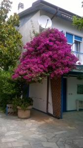 SanBart Apartment - AbcAlberghi.com
