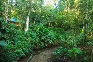 Cacao Monkeys