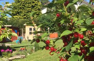 Ferienhaus Linn, Holiday homes  Hohenau - big - 22