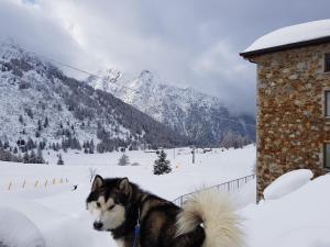 SCI AI PIEDI,PASSEGGIATE,MOUNTAIN BIKE,RELAX - Apartment - Passo Tonale