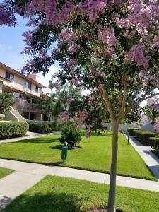 Upscale Designer Condo Condo, Apartments  Huntington Beach - big - 12