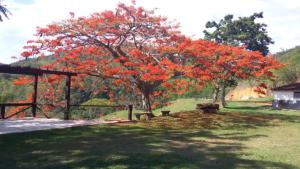 Fazenda Caturama, Prázdninové domy  Areal - big - 14