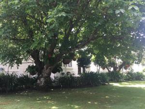 Aylstone Martinborough, Guest houses  Martinborough  - big - 132