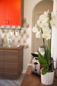Clodio10 Suite&Apartment, Guest houses  Rome - big - 3