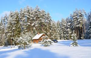 Torvaaugu Holiday Homes in Valgehobusemagi