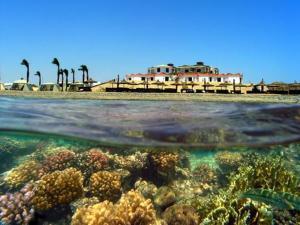 Coral Garden Resort, Сафага