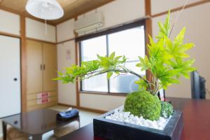 Tokyo Faminect Apartment FN230, Апартаменты  Токио - big - 1