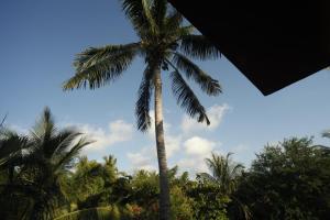 Tres Casitas, Casa Allegra, Ferienwohnungen  Puerto Escondido - big - 14