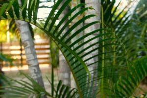 Tres Casitas, Casa Allegra, Apartments  Puerto Escondido - big - 15