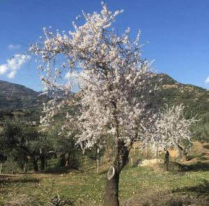 Agriturismo Su Barraccu, Farm stays  Loceri - big - 17