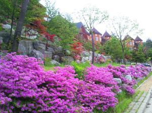 Pyeongchang Forest Hotel, Hotels  Pyeongchang  - big - 167