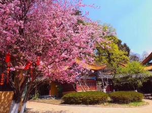Lijiang Feinimoshu Boutique Guesthouse, Penziony  Lijiang - big - 4