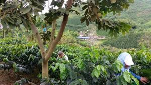 Hacienda La Chiquita, Nyaralók  Manizales - big - 54