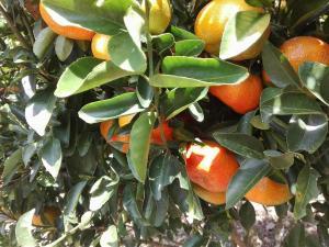 La Toscana Campestre, Agriturismi  Socorro - big - 6