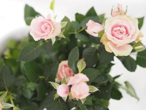 La Rose Blanche, Ferienwohnungen  Prag - big - 15