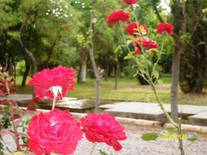 Exclusive Centro Turistico, Chaty v prírode  Maipú - big - 31