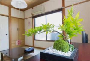 Tokyo Faminect Apartment FN230, Апартаменты  Токио - big - 13