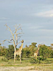 Kwalape Safari Lodge, Turistaházak  Kasane - big - 37