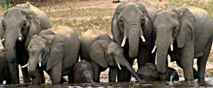 Kwalape Safari Lodge, Turistaházak  Kasane - big - 26