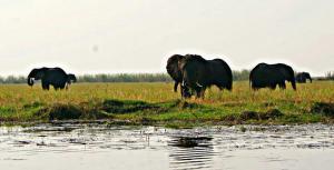 Kwalape Safari Lodge, Turistaházak  Kasane - big - 28