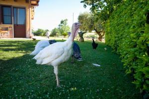 Agriturismo Il Sesto Senso, Farmy  Ladispoli - big - 28