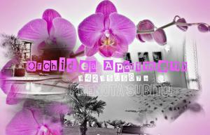 Orchidea Apartment - AbcAlberghi.com
