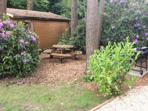 Forest Edge, Case vacanze  Saint Leonards - big - 7