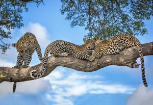 Motswari Private Game Reserve (29 of 31)